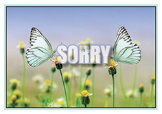 sorry-small